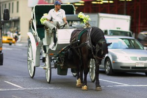 NY-Carriage-Horses2