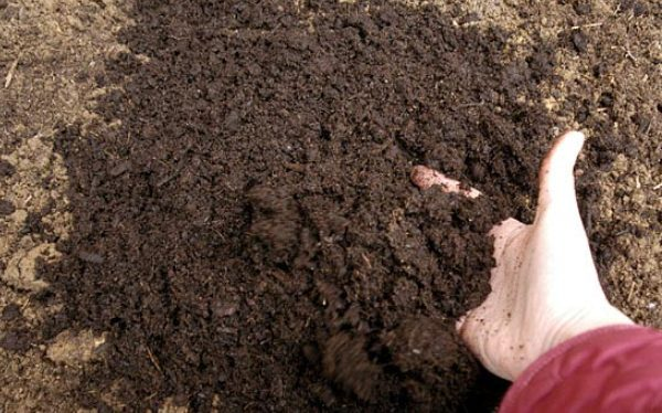 Creating a healthy garden from scratch for Organic soil uk