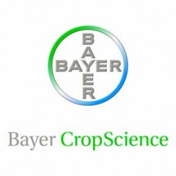 bayer2-color