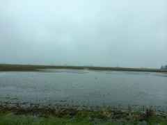 flooded field in  Montgomery County