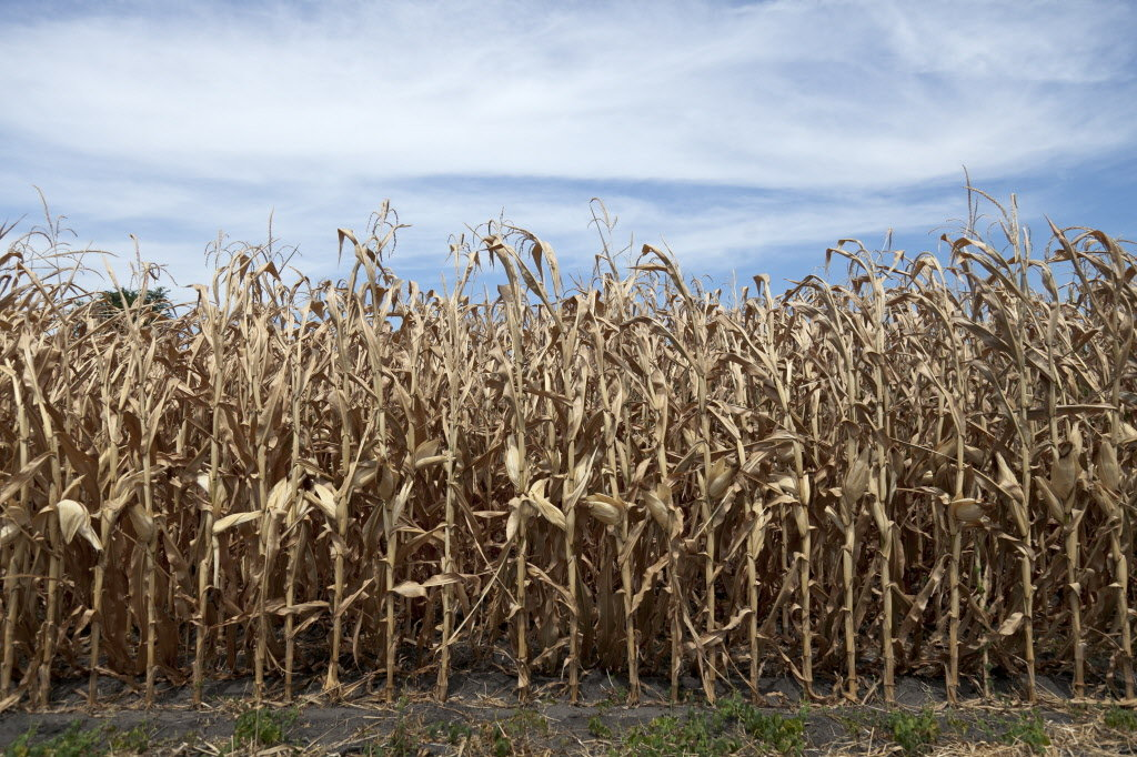 New Crop Insurance Option Help Producers Hit By Drought